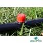 Ціна на товар - Капельница садовая Presto-PS регулируемая 0-70 л/ч, в упаковке - 100 шт. (AOD-0170)