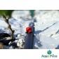 Капельница садовая Presto-PS регулируемая 0-70 л/ч, в упаковке - 100 шт. (AOD-0170)